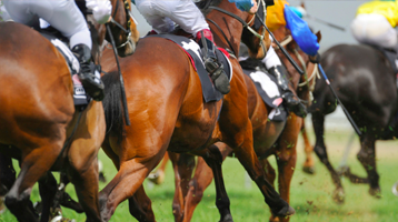 Horse racing coach trips <p>Mini bus & coach hire for the big day at the races, from 16 - 80 seaters available. We have you covered.</p>